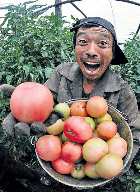 Овощи-мутанты с «желтых» плантаций есть опасно. Фото: «ИТАР-ТАСС»